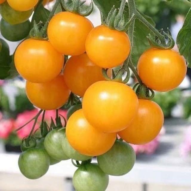 Хотите помидор? Купите…трихопол!
