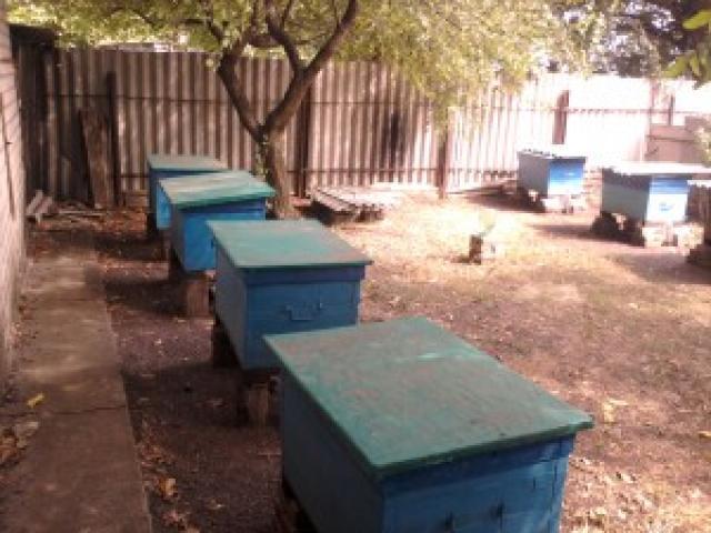 Инструкция для начинающего пчеловода – как сделать пасеку для пчел своими руками