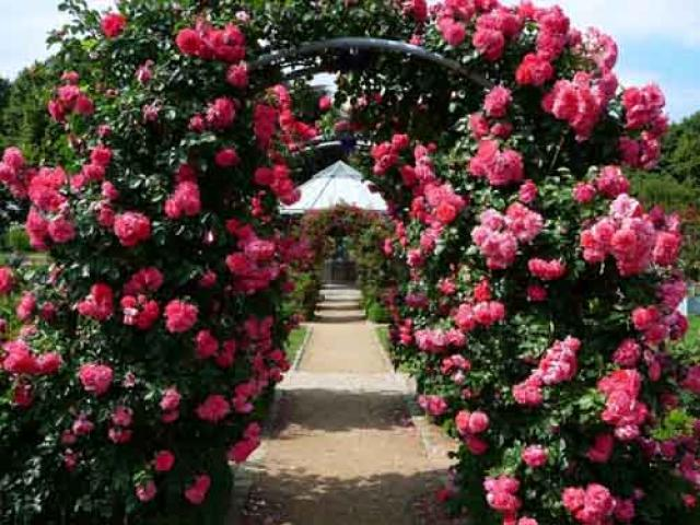 Используемые для озеленения растения — выбор и применение в дизайне садового ландшафта