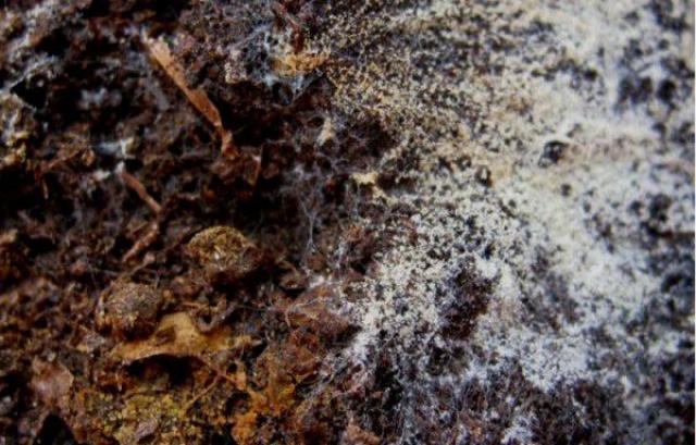 Как обеззаразить землю в теплице – способы обработки почвы