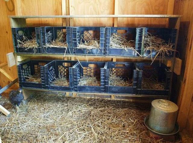Как построить сарай для кур несушек на много лет своими руками