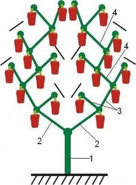 Как правильно формировать перец, чтобы увеличить созревание и рост плодов