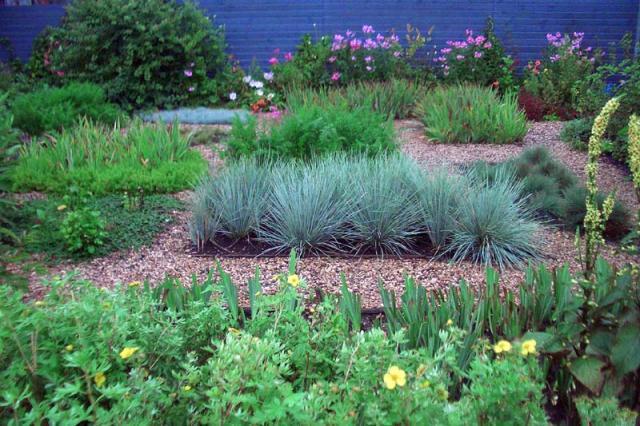 Как создать гравийный сад на участке быстро и просто: идеи для креативных «лентяев»