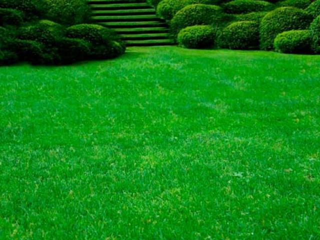 Как выбрать семена для газона – обзор лучших трав и советы новичкам