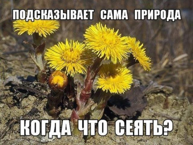 Когда что сеять: подсказывает сама природа