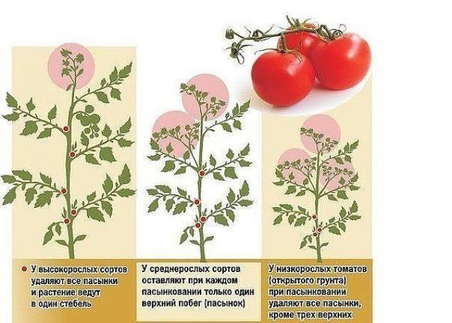 Листва у томатов удалять или нет?