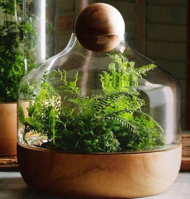 Мини сад в бутылке своими руками: грандиозные идеи для крошечного флорариума