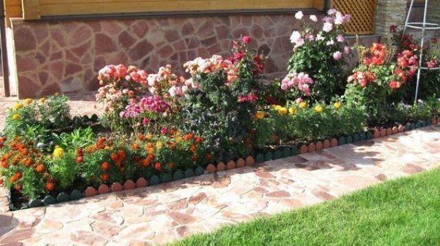 Многолетние цветы долгого цветения