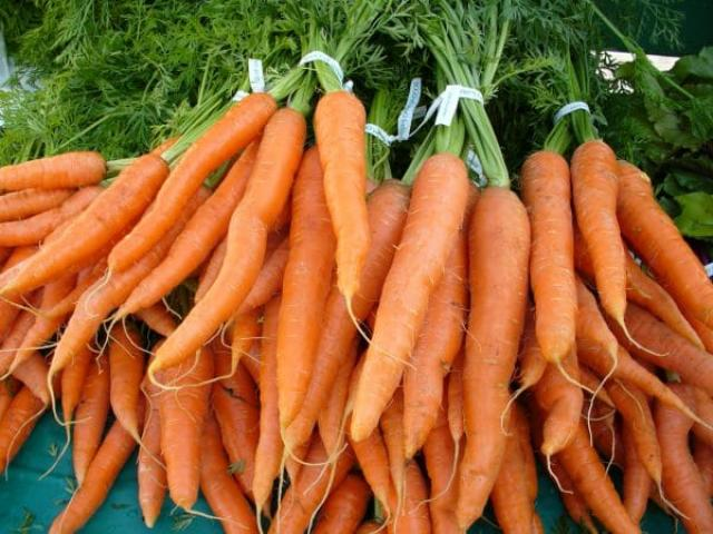 Морковные премудрости — опыт выращивания
