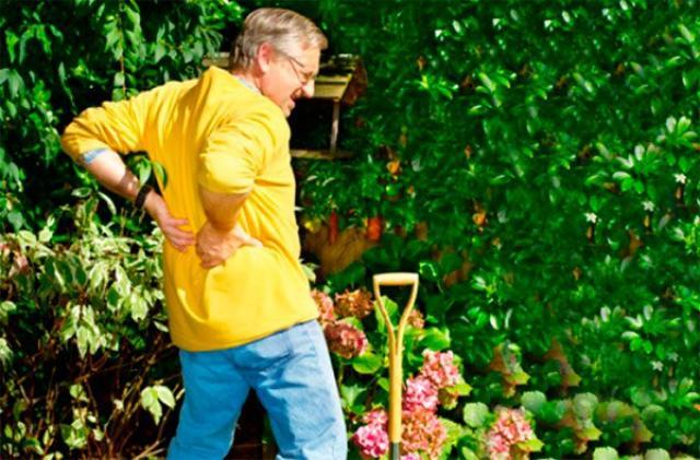 Огород без боли в спине