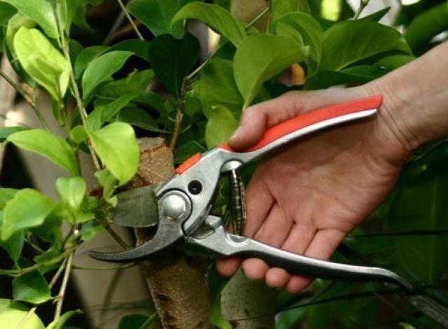 Основные ошибки при обрезке растений