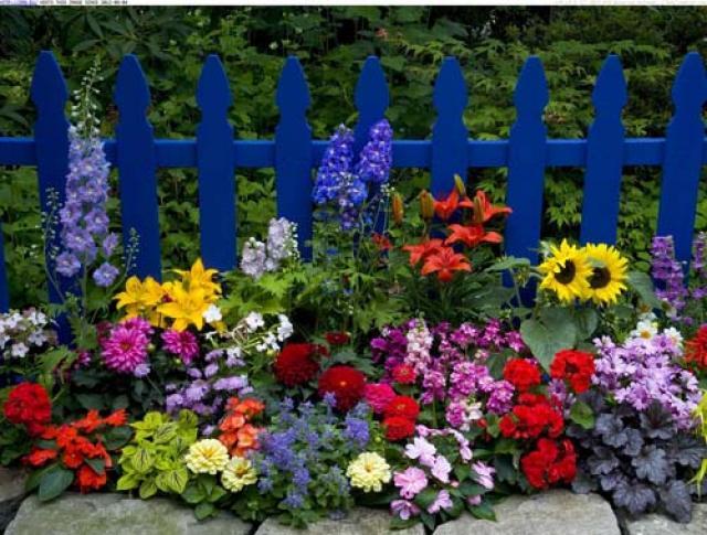 Особое настроение во фруктовом саду – дизайн плодово-ягодного уголка для души