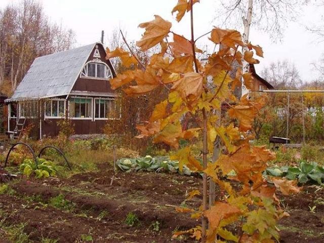 Подготовка грядок осенью под чеснок и лук, морковь и огурцы