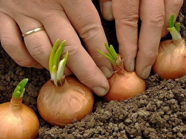 Полное собрание дачных хитростей для садоводов и огородников