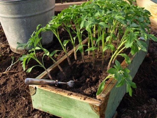 Поможем урожаю. Cредствa для защиты растений
