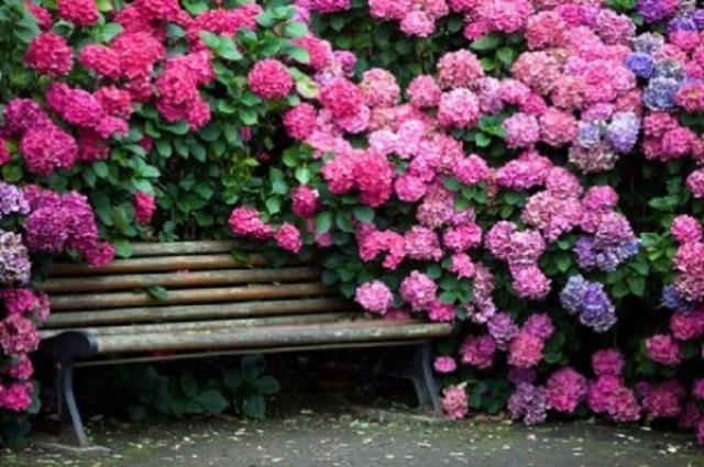 Преврати свой участок в место волшебного отдыха! 10 потрясающих кустов которые сделают твою дачу невероятно красивой!