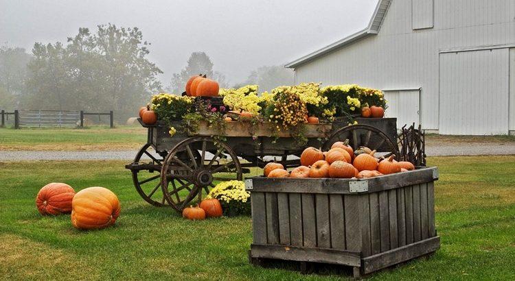 Приметы, заговоры и обряды для богатого урожая