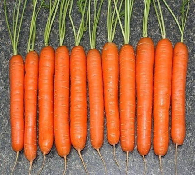 Секрет выращивания моркови