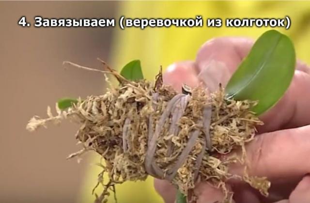 Секреты рассадки орхидей: как одно растение превратить в сто