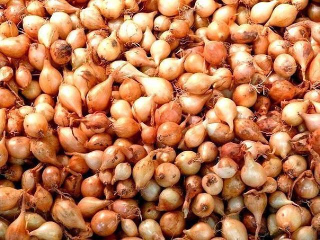 Семена любого лука прорастают очень трудно из-за…