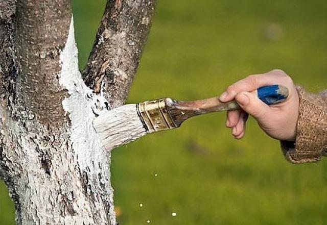 Состав побелки для деревьев своими руками