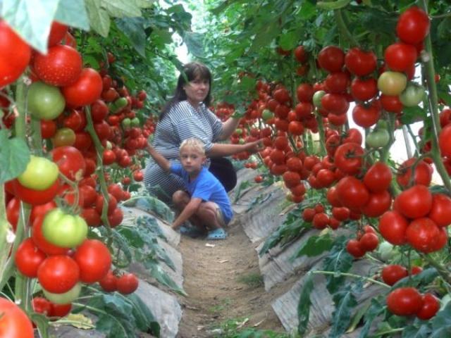 Супер-рецепт для томатов: очень эффективная подкормка!