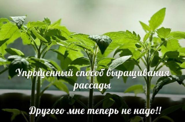 Упрощенный способ выращивания рассады