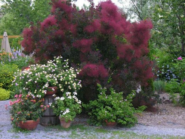Встречаем осень на даче: фавориты осеннего сада